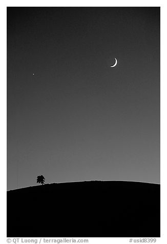 Tree on cinder cone curve, crescent moon, Craters of the Moon National Monument. Idaho, USA (black and white)
