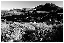 Brush in lava field, Craters of the Moon National Monument. Idaho, USA ( black and white)