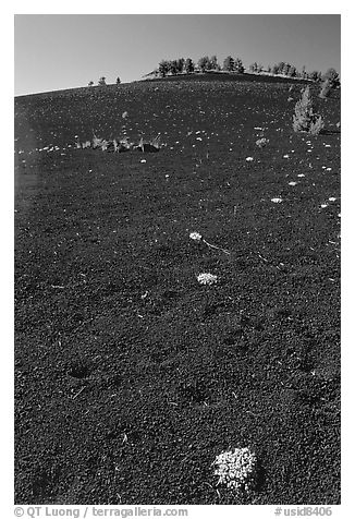 Shrubs growing in cinder, Craters of the Moon National Monument. Idaho, USA (black and white)