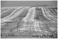 Field. Idaho, USA ( black and white)