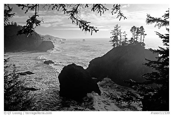 Coastline and trees, late afternoon, Samuel Boardman State Park. Oregon, USA (black and white)
