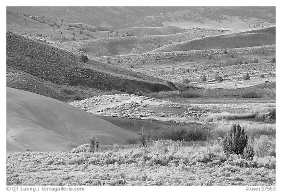 Sagebrush and ash hills. John Day Fossils Bed National Monument, Oregon, USA (black and white)