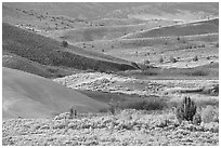 Sagebrush and ash hills. John Day Fossils Bed National Monument, Oregon, USA ( black and white)