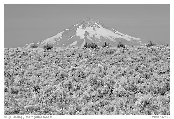 Mt Hood above sagebrush-covered plateau. Oregon, USA
