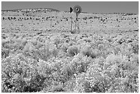 Windmill and  sagebrush. Oregon, USA (black and white)