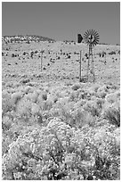Sagebrush slopes and windmill. Oregon, USA (black and white)