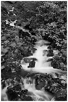 Wahkeena Falls. Columbia River Gorge, Oregon, USA (black and white)