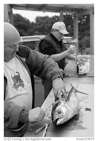 Men cleaning just caught fish. Newport, Oregon, USA (black and white)