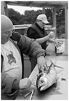 Men cleaning just caught fish. Newport, Oregon, USA ( black and white)