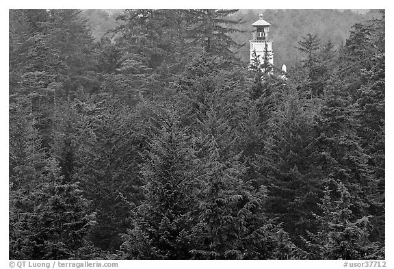 Spruce-Hemlock forest and Umpqua River Lighthouse. Oregon, USA (black and white)