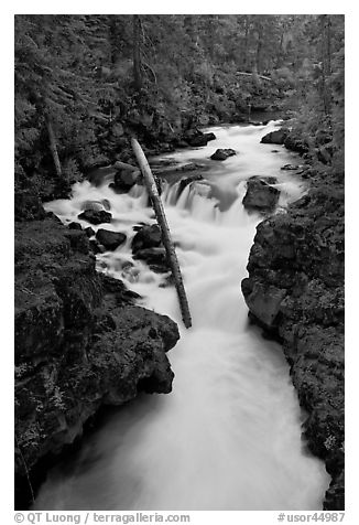 Rogue Gorge. Oregon, USA (black and white)