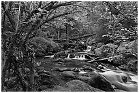 Watson Creek. Oregon, USA (black and white)