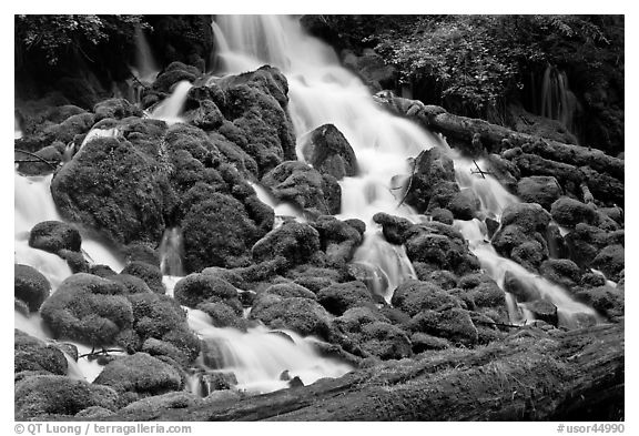 Mossy rocks and stream, North Umpqua river. Oregon, USA (black and white)