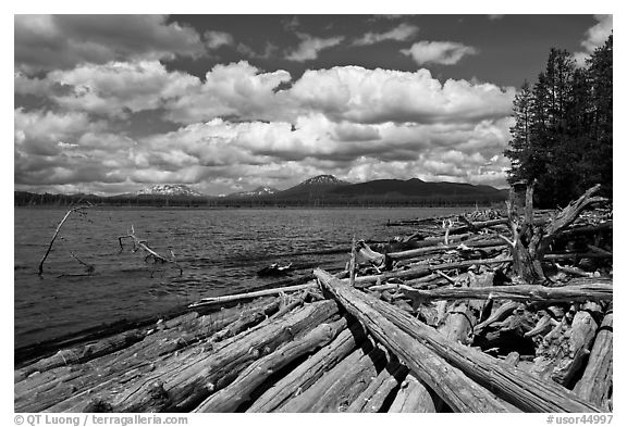 Crane Praire Reservoir and logs. Oregon, USA (black and white)