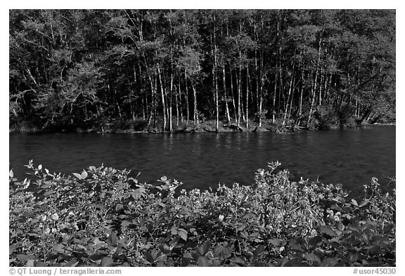 Flowers, McKenzie river, and trees. Oregon, USA (black and white)