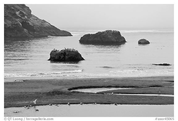 Pool and rocks, Harris Beach State Park. Oregon, USA (black and white)
