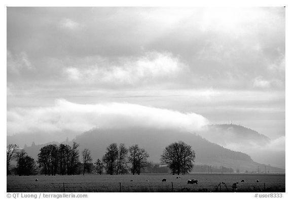 Trees and foothills. Oregon, USA (black and white)