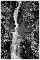 Waterfall, Hamburg Mountain State Parke. Oregon, USA (black and white)