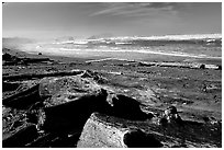 Beach with driftwood. Bandon, Oregon, USA ( black and white)