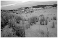 Sand Dunes near Florence. Oregon, USA ( black and white)