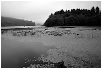 Coastal lagoon. Oregon, USA ( black and white)