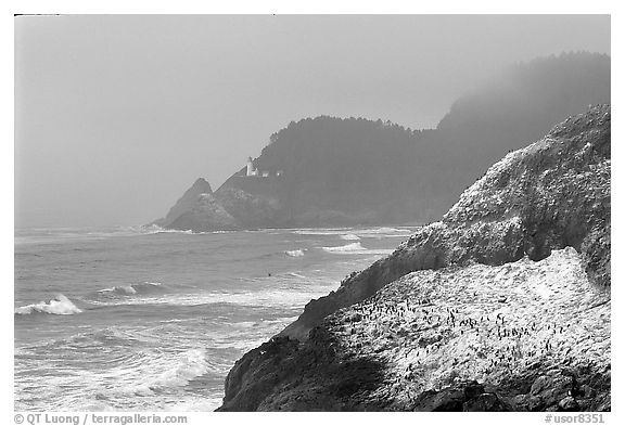 Rock with birds in fog,  Haceta Head in the background. Oregon, USA (black and white)