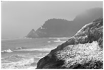 Rock with birds in fog,  Haceta Head in the background. Oregon, USA ( black and white)