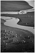 Seabirds and stream on beach. Oregon, USA (black and white)