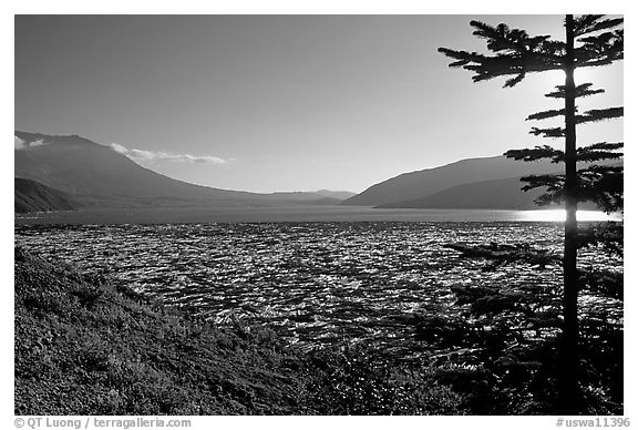 Floating tree trunks on Spirit Lake. Mount St Helens National Volcanic Monument, Washington (black and white)