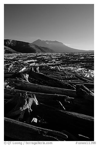 Tree trunks cover Spirit Lake, late afternoon. Mount St Helens National Volcanic Monument, Washington (black and white)