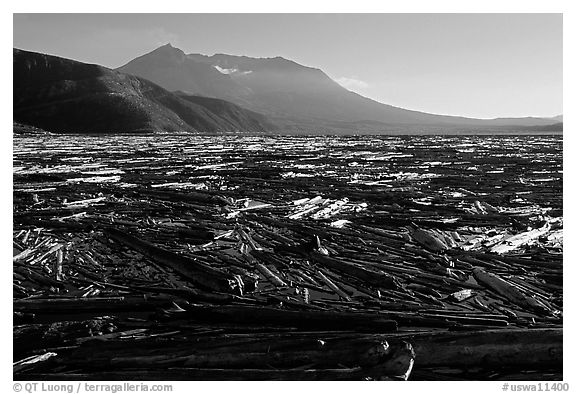 Enormousn tree mat cover Spirit Lake, and Mt St Helens. Mount St Helens National Volcanic Monument, Washington (black and white)