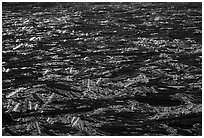Floating log mat on Spirit Lake. Mount St Helens National Volcanic Monument, Washington ( black and white)