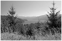 Grasses, trees, and Riffe Lake. Washington ( black and white)