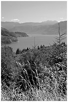 Summer grasses and Riffe Lake. Washington (black and white)