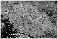 Bloc of columnar basalt, Lava Canyon. Mount St Helens National Volcanic Monument, Washington ( black and white)
