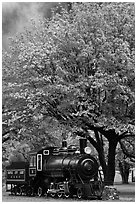 Locomotive under tree in fall foliage, Newhalem. Washington (black and white)