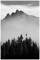 Spruce and mountain above fog. Washington ( black and white)