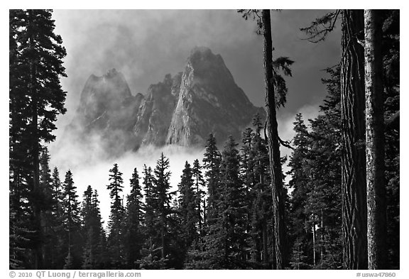 Liberty Bell Mountain framed by spruce trees. Washington (black and white)