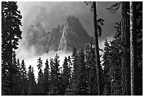 Liberty Bell Mountain framed by spruce trees. Washington ( black and white)