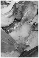 Fresh salmon for sale, Pike Place Market. Seattle, Washington (black and white)
