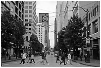 Pedestrian crossing and busses, downtown. Seattle, Washington ( black and white)