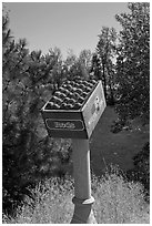 Sculpture of red apples box, Cashmere. Washington ( black and white)