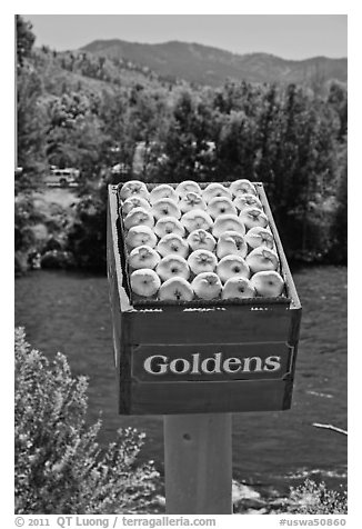 Sculpture of yellow apples box, Cashmere. Washington (black and white)