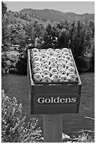 Sculpture of yellow apples box, Cashmere. Washington ( black and white)