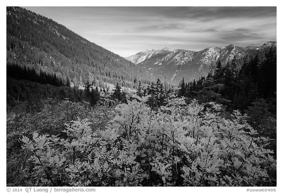 Fall foliage in valley below Easy Pass, Okanogan National Forest. Washington (black and white)