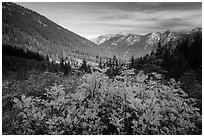 Fall foliage in valley below Easy Pass, Okanogan National Forest. Washington ( black and white)