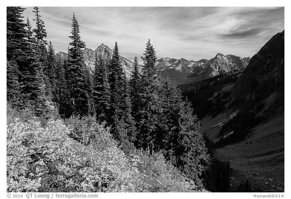 Berry plants, row of fir, and peaks below Easy Pass, Okanogan National Forest. Washington (black and white)