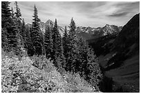Berry plants, row of fir, and peaks below Easy Pass, Okanogan National Forest. Washington ( black and white)