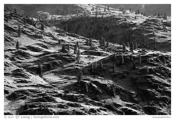Dry hills and pines. Washington (black and white)