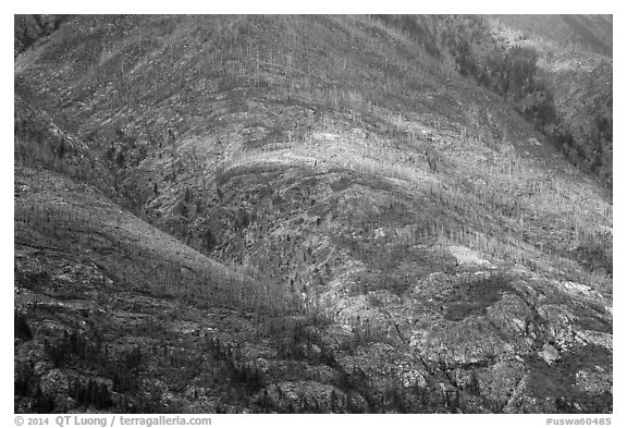 Slopes with burned forest and fall foliage, Lake Chelan. Washington (black and white)